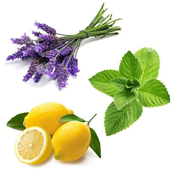 Intro kit Lavender Lemon Peppermint essential oils doTERRA   AromaNita.com.au